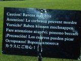 Ravens Graveyard