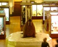 The Horniman Museum