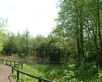 Camley Street Natural Park