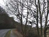Stokenchurch Shoe Tree