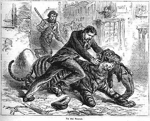 Boy Saved from Tiger
